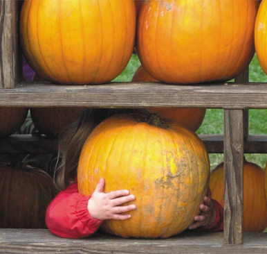 Locally grown and vibrant with color, pumpkins and apples are a staple for folks, many who come from miles away.