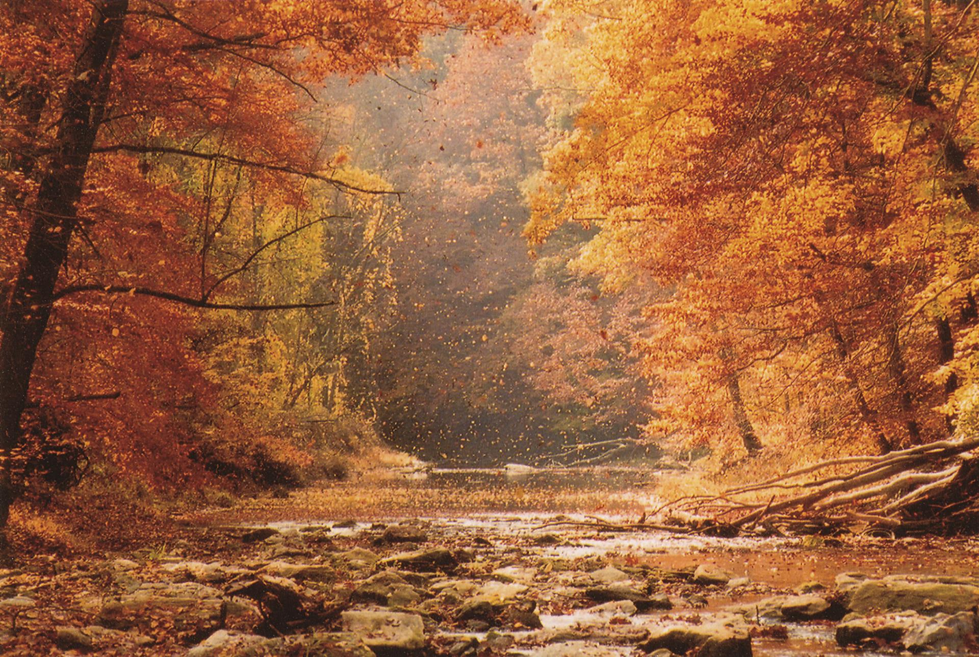 Our many creeks and tributaries provide stunning backdrops for the fall foliage